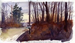 Stand Of Trees On Carpenter Hill Road At Sunset - watercolor plein air landscape sketch by Tony Conner