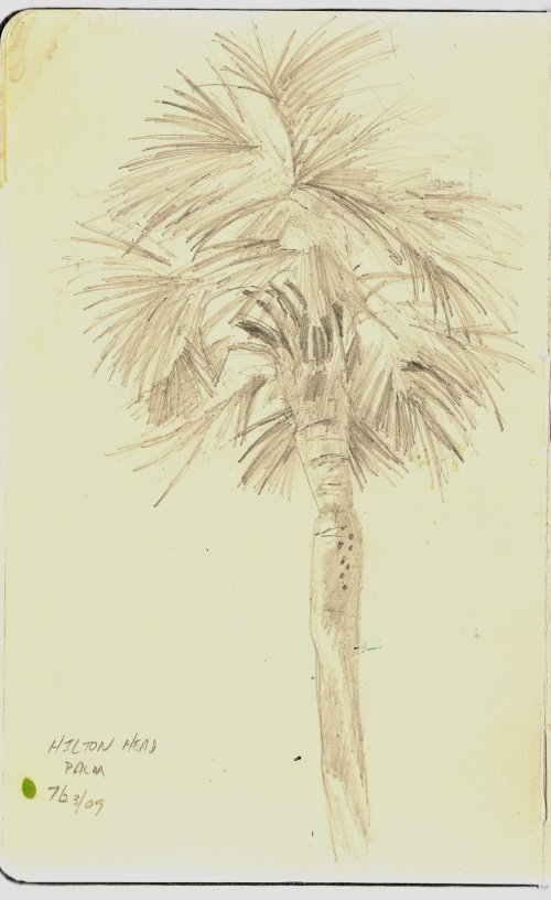 Palm tree sketch - Hilton Head Island