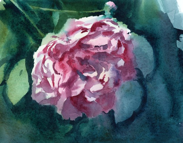 """Peony"" watercolor painting by Tony Conner"